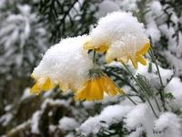 Carmel de Bayonne, le jardin sous la neige