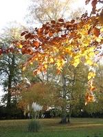 couleur-d-automne