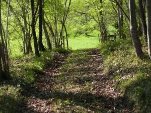 chemin abbaye  de Maumont