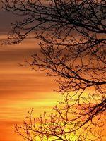 ciel-feu-feuillage-abbaye-maumont