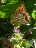 papillon-cactus-abbaye-maumont
