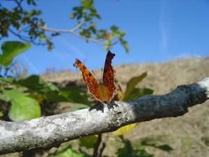 papillon-vie-abbaye-maumont