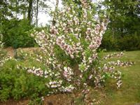 carmel saint-maur prière fleurs