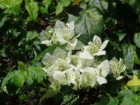 bouquet pascal abbaye maumont