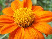 fleur orange2 abbaye maumont